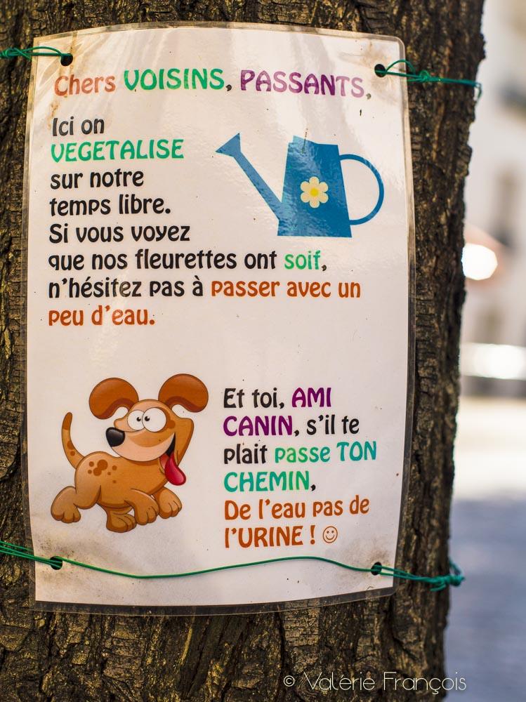 Le pied d'arbre de Carole dans le 13ème arrondissement de Paris