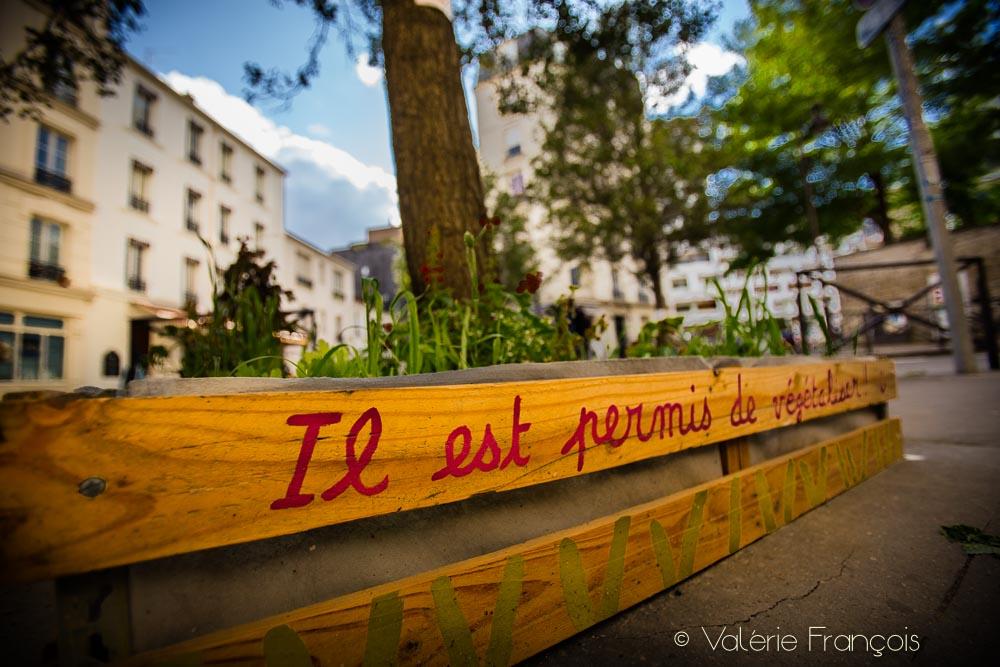 Il est permis de végétaliser un pied d'arbre à Paris