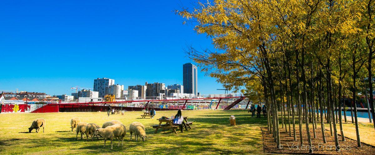 Les bergers urbains s'arrêtent au parc du Millénaire pour une pause déjeuner.