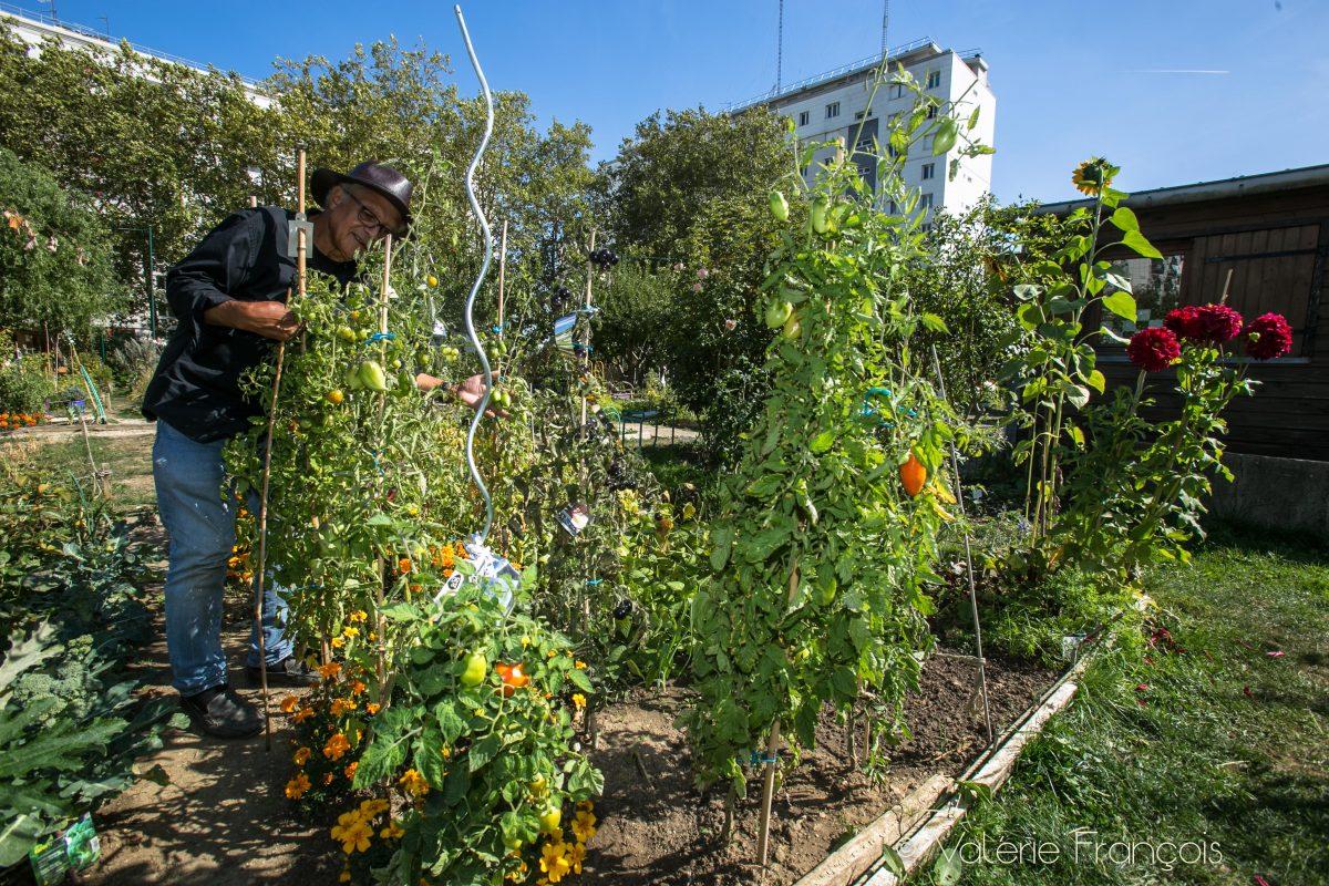 Je suis désormais à la retraite mais je crois que je travaille beaucoup plus qu'avant. Je continue à donner des conseils au jardinier car beaucoup arrivent en pensant que c'est facile de jardiner.