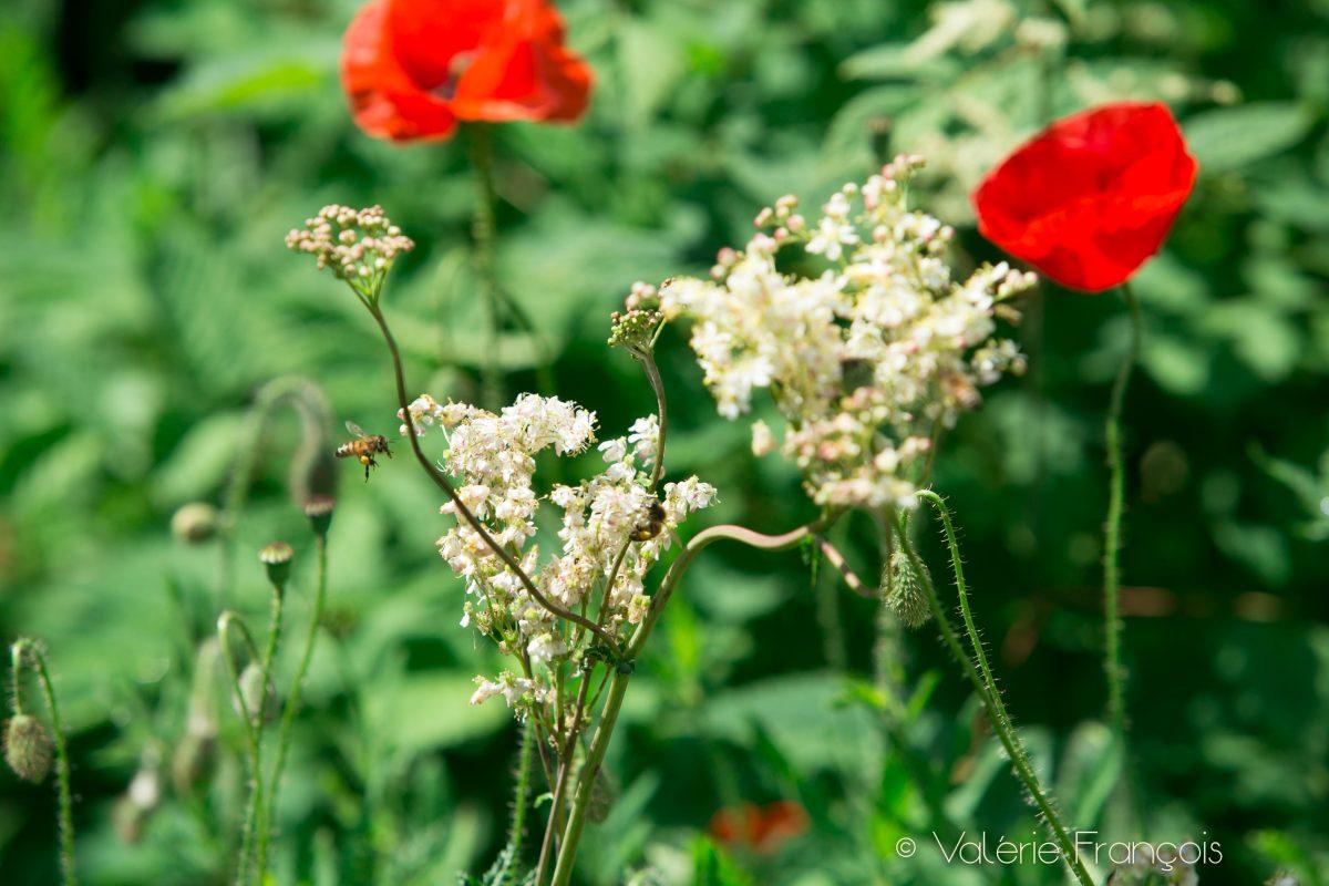 En ville, les abeilles trouvent à manger une grande partie de l'année car il y a beaucoup plus de variétés de fleurs. De plus, grâce à un temps plus clément (il fait souvent un ou deux degré de plus en ville), la floraison dure aussi plus longtemps. Les abeilles peuvent donc butiner plus longtemps et mieux supporter l'hiver.