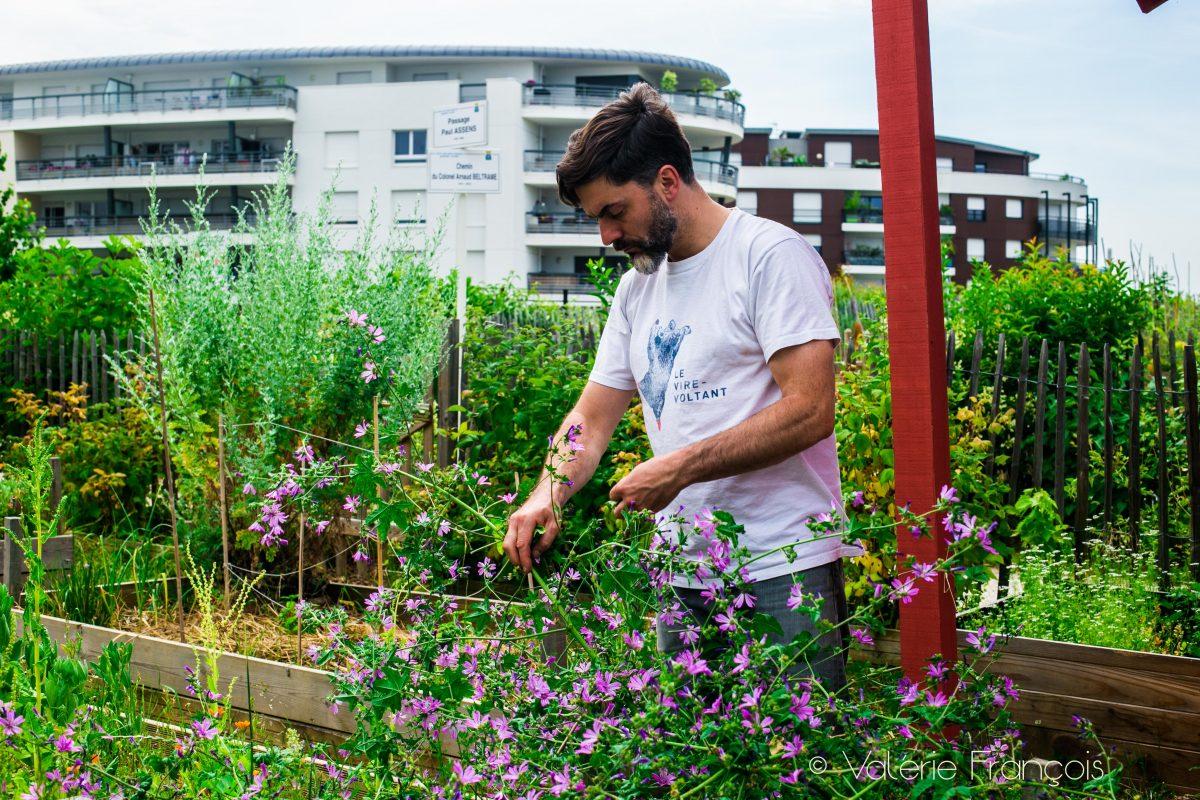 La mauve est une plante qui lie les sauces à merveille !