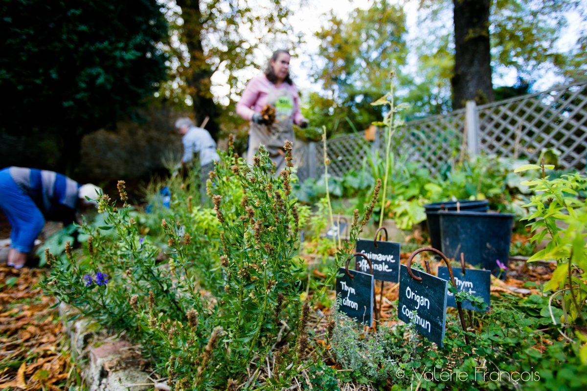 Le jardin d'Amélie - permaculture