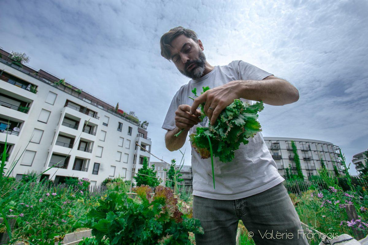 Tous les plants sont achetés dans une pépinière bio. On fait très attention aux semences. On n'utilise que des semences bios.