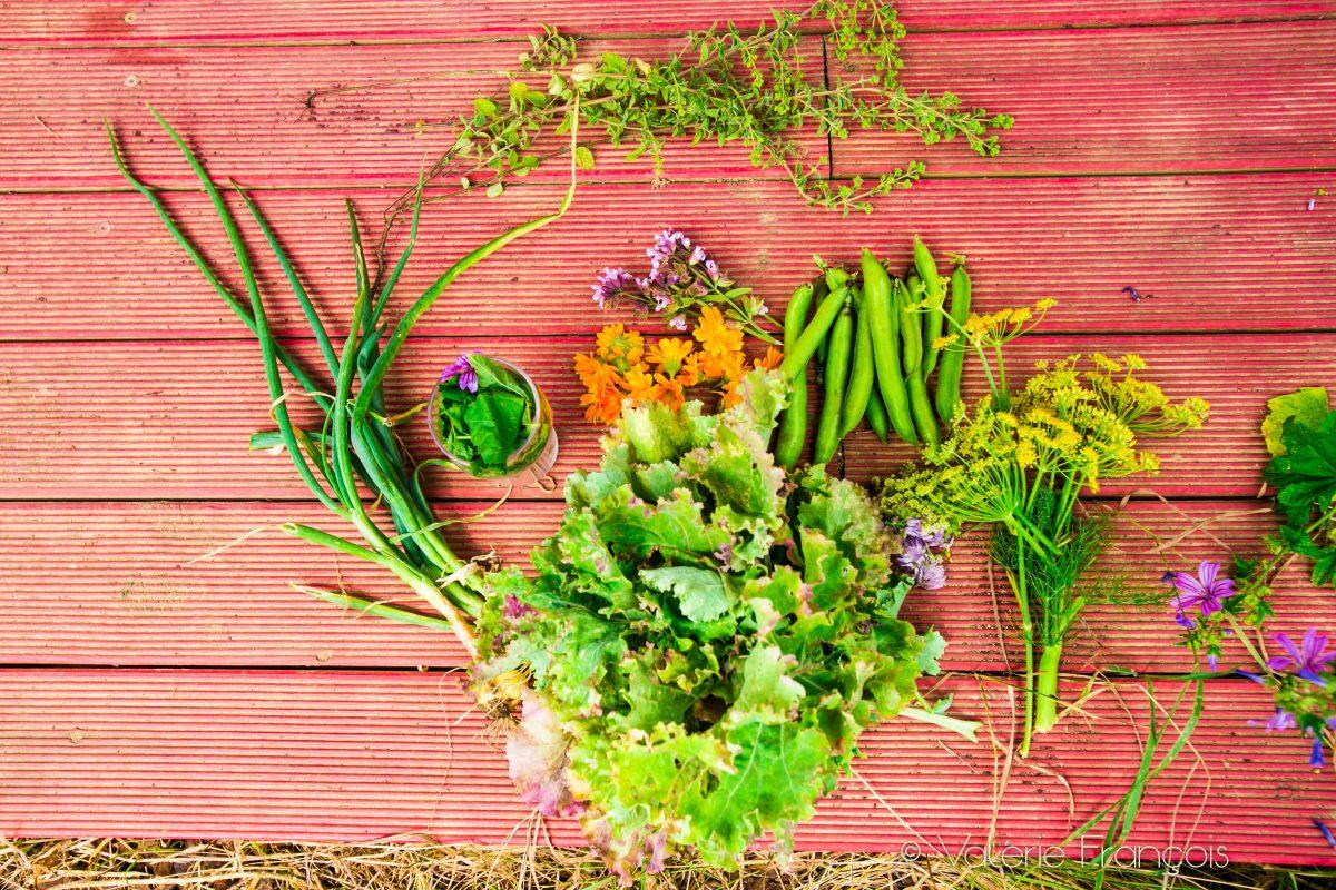 Dans ce potager, nous plantons essentiellement des aromates, des fruits et légumes qui supportent bien la chaleur.
