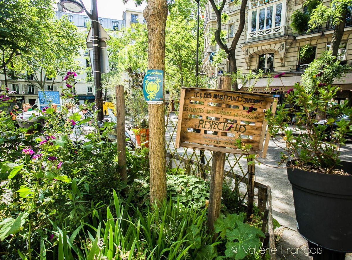 L'association Village Jourdain végétalise 20 pieds d'arbre à Paris.
