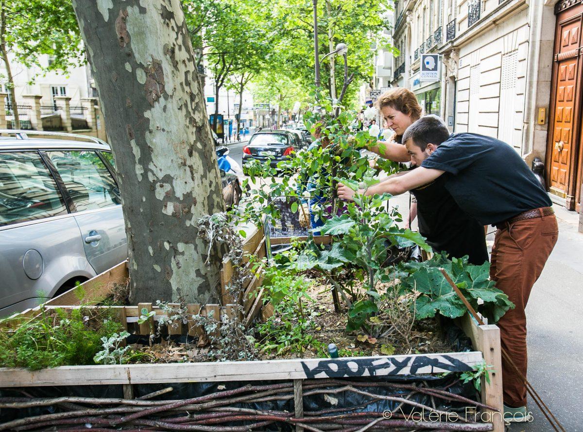 Pieds d'arbres végétalisés rue des Pyrénées