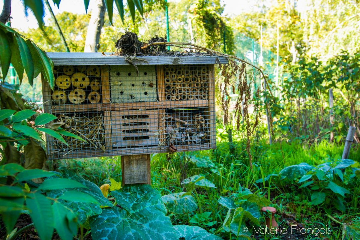 Hôtel à insectes - jardin du monde - cité universitaire